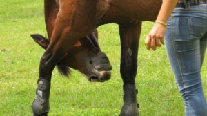 horse-550638_640