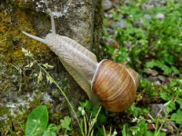 SNAIL SEEN WITH ERASMUS MAKING AN ESCAPE FROM SAFARI