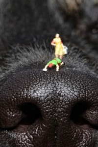 SHIMY ON DOG'S NOSE