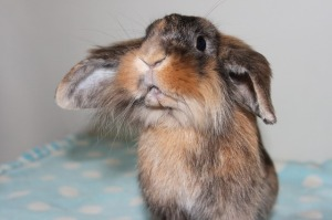 RABBIT MOST LIKELY TO SUCCEED