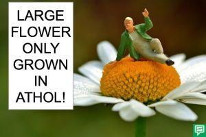 LARGE FLOWER BUBBLE