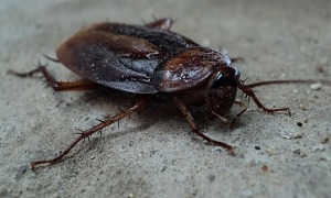 MR. SMITH'S COCKROACH