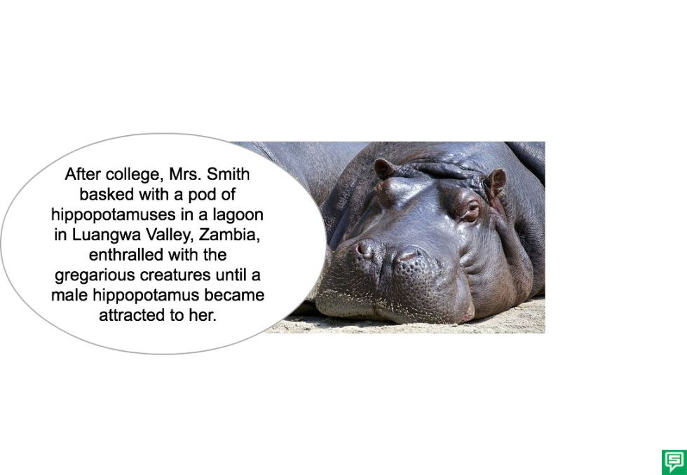 MRS. SMITH HIPPO ATTRACTED