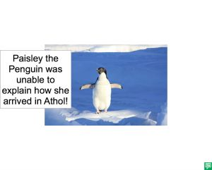PAISLEY THE PENGUIN BUBBLE