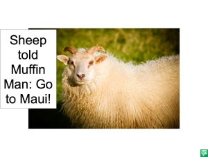 SHEEP MUFFIN MAN MAUI