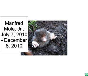 MANFRED MOLE, JR. DEATH