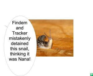 SNAIL MISTAKENLY DETAINED