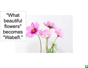 WHAT BEAUTIFUL FLOWERS