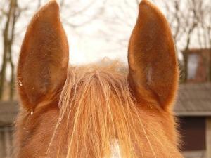 EAR 10