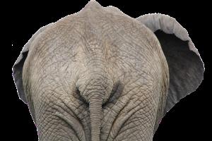 ELEPHANT REAR END