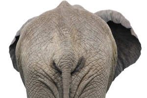 ELEPHANT REAR END