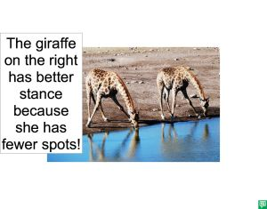 GIRAFFES AND THE THEORY OF SPOTS