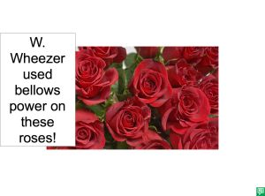 HEALTHY ROSES AFTER USING BELLOWS POWER