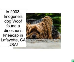 IMOGENE'S DOG WOOF FOUND DINOSAUR'S KNEECAP