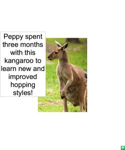 KANGAROO FOR PEPPY