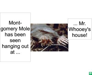 MONTGOMERY MOLE AND WHOOEY
