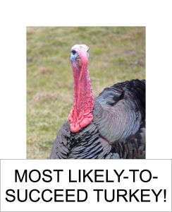 MOST LIKELY TO SUCCEED TURKEY