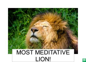 MOST MEDITATIVE LION