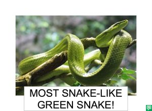 MOST SNAKE-LIKE GREEN SNAKE