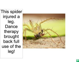 SPIDER DANCE THERAPY