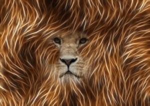 lion-360203_640