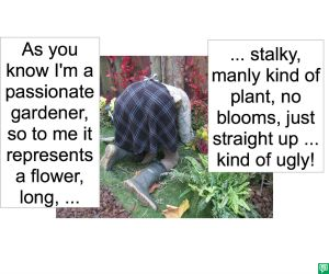 PASSION ATA STALKY PLANT