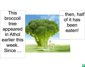 BROCCOLI TREE HALF EATEN