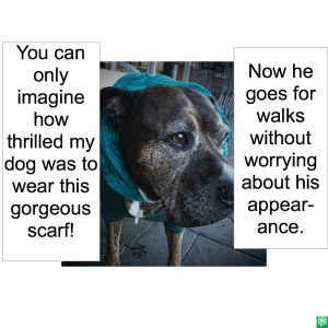 DOG WITH SCARF APPEARANCE