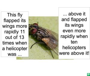 FLY FLAPPING ITS WINGS