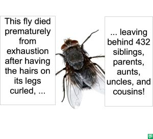 FLY DIED EXHAUSTION