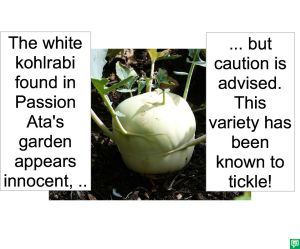 WHITE KOHLRABI TICKLE