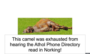 CAMEL EXHAUSTED FROM NORKING