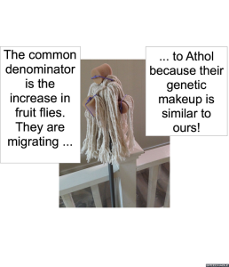 SCIENTIST #1 COMMON DENOMINATOR FRUIT FLIES