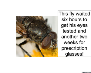 fly-eyes-tested