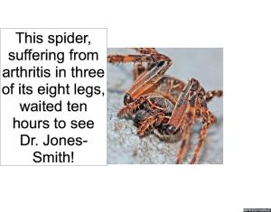 spider-arthritis