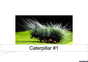 caterpillar-1-labeled