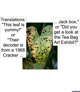 hole-coding-on-leaf-translations
