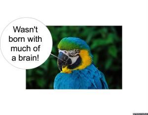 nod-pmurts-parrot-brain