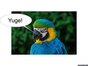 nod-pmurts-parrot-yuge