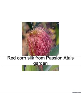 red-corn-silk-passion-ata