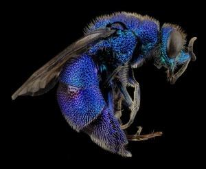 wasp-abdominal-aches