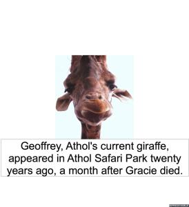 geoffrey-giraffe-twenty-years