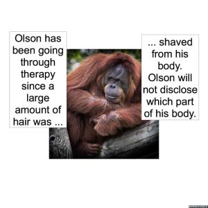 orangutan-shaved