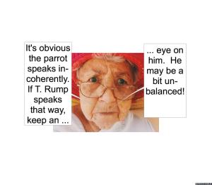 anna-lou-very-pickys-grandma-parrot