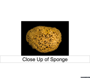 close-up-of-sponge