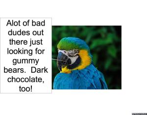 nod-pmurts-parrot-dark-chocolate