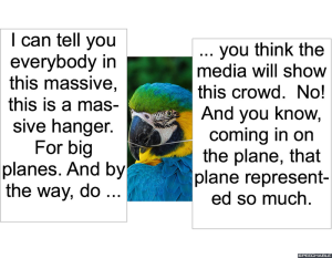 nod-pmurts-parrot-plane