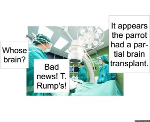 parrot-transplant