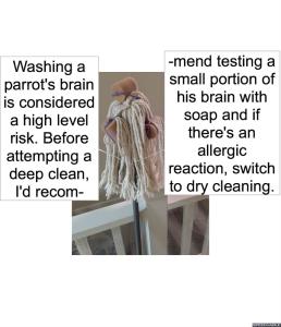 scientist-1-parrots-brain
